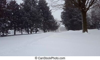 Snow Storm Blizzard With Evergreen Trees. Snowing Nature Scene With Tree Area. Snowy North Weather Scenic Landscape.