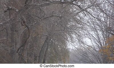 Snow Storm in Forest Trees