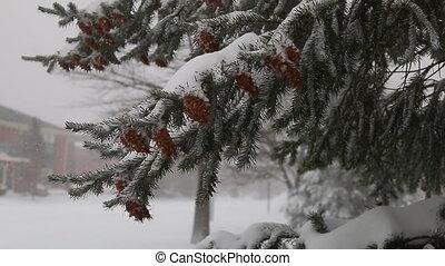snow storm jonas  snowstorm