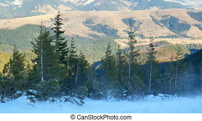 Snow storm snow winter - Snow blows through treetops storm
