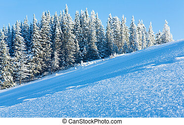 Snow surface on mountainside and fir forest behind.