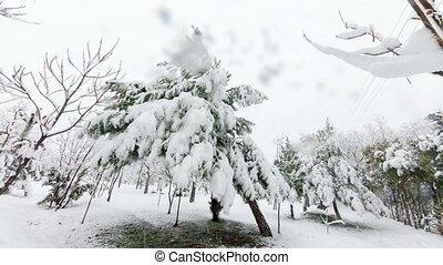 snow timelapse