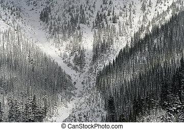 snow trees mountain