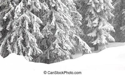 Snow - Falling snow