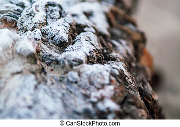 snow white frost lying on the bark of a tree close up