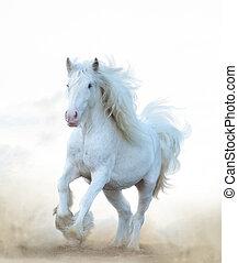 Snow white horse running
