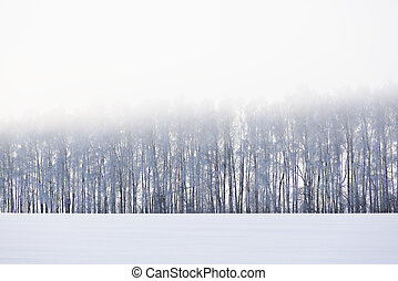 Snow winter landscape. Distant forest and field in dusk