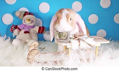 Snow winter snowman sled pet animal rabbit lop christmas...
