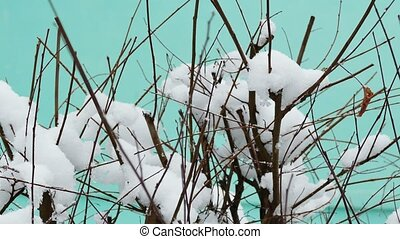 Snow winter tree branch on a blue background