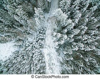 Forest from above - Snow wrapped Forest from above in winter