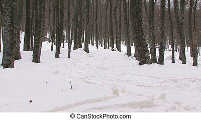 snowboarding, forêt