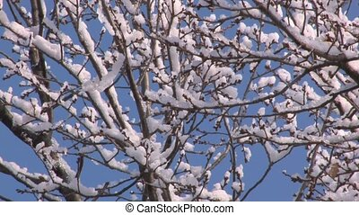 Snowbound branches on blue sky