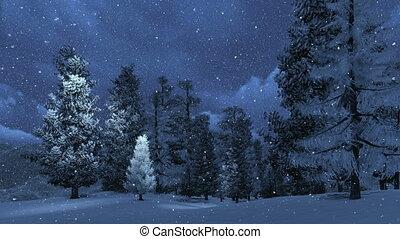 Snowbound pinewood and snowfall at