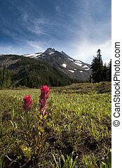 Snowcapped peak in summer