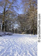 Snowcovered landscape