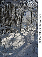 Snowdrifts of large snowflakes in the winter woods.