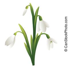 Snowdrop  - A vecror image of a spring-flower