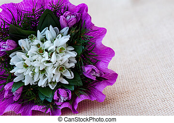 Snowdrop flowers bouquet with fir twigs in purple