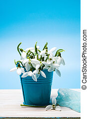 Snowdrop flowers in a can vase