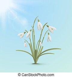 Snowdrop flowers, spring background.