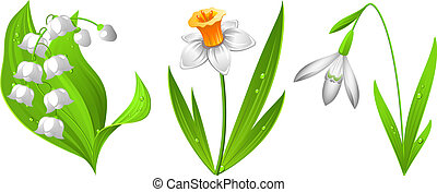 Vector illustration of spring flowers: snowdrop, narcissus, lily of the valley. EPS 8, AI, JPEG