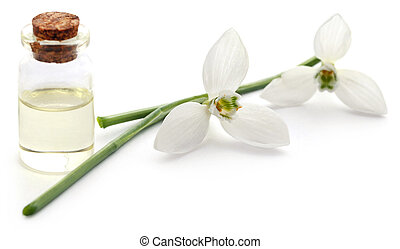 Snowdrop with essential oil in a bottle