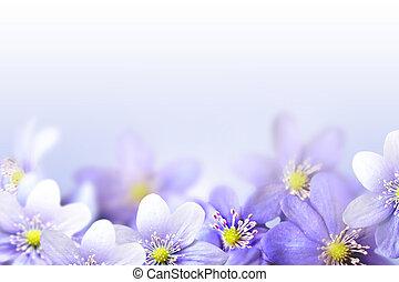 snowdrops, 花, 背景