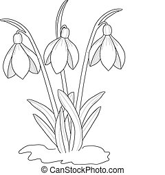 Snowdrops drawing