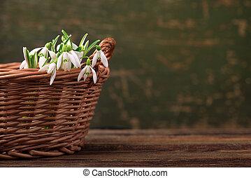 snowdrops, flores del resorte, en, cesta, en, tabla de madera, plano de fondo