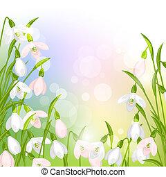 snowdrops, flores mola, natural, experiência.