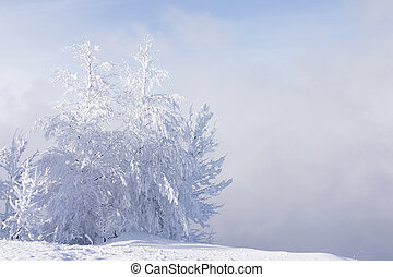 snowed and the frozen lonely trees costing in a snowdrift on a background of a fog and the blue sky