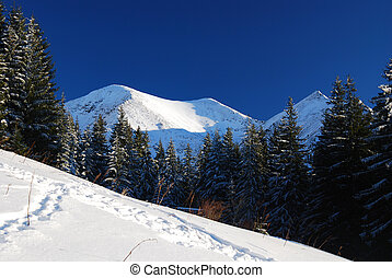 Snowed peak in Carpathian mountains
