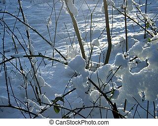 Snowed shrubbery