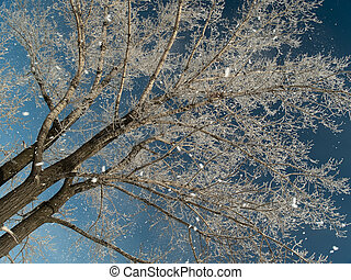 Snowfall and tree - Snowfall on blue sky and tree background