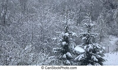 Snowfall calmly and quietly falls on branches of trees....