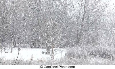 Falling snow on winter landscape