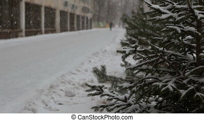 Snowfall - Fir-tree near road and building