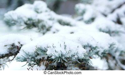 Snowfall forest park snowfall