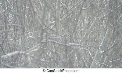 Snowfall in the branches