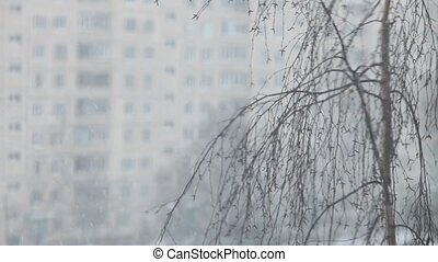 city, winter landscape - Snowfall in the city, winter...