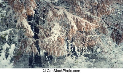 Snowfall in the forest 2