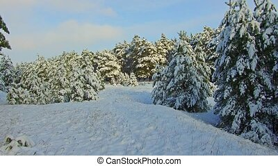 Snowfall in the forest park. Winter landscape in...