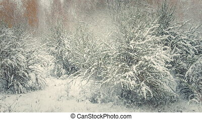 Snowfall in the forest