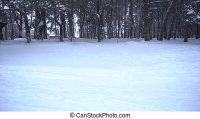 snowfall in the forest. Winter time - snowfall in the...