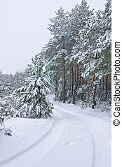 Snowfall in the pine forest