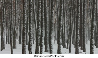 snowfall in winter forest
