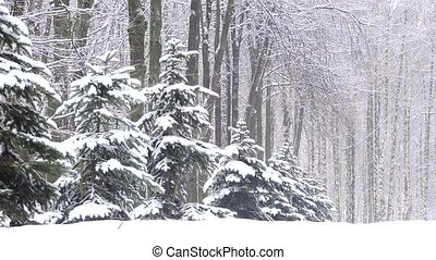 Snowfall in winter in the forest, soft snowy christmas...