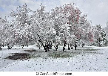 Snowfall in winter Park