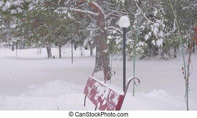 snowfall in winter Park. Winter frosty day - snowfall in...