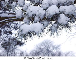 Snowfall on a pine tree